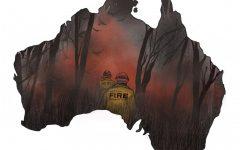 Bushfires devastate Australian wildlife