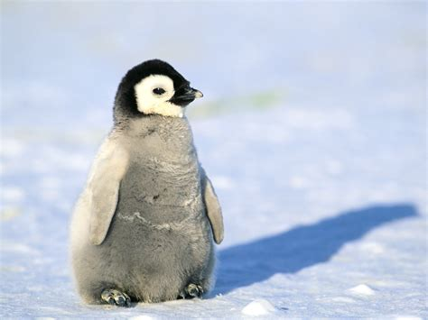 these are cute animals but this is the CUTEST
