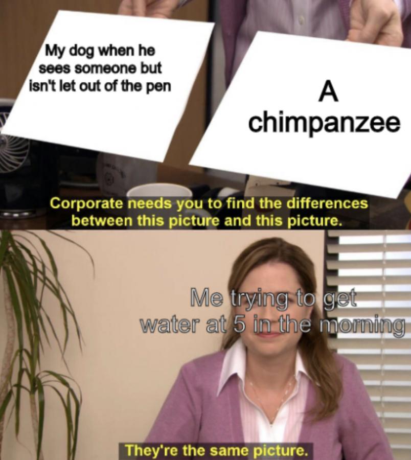 Meme of the Week #5