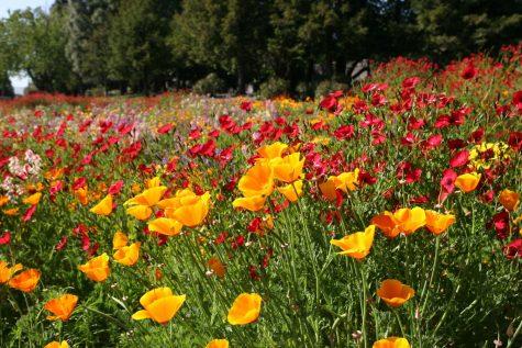 Springtime flowers in bloom